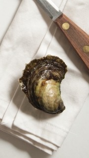 Oyster2