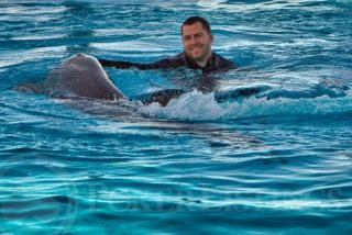 """Dan """"Jungleman"""" Swims with Dolphins"""